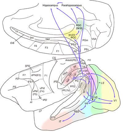 空間知覚 - 脳科学辞典