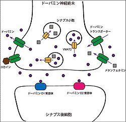 小胞モノアミントランスポーター