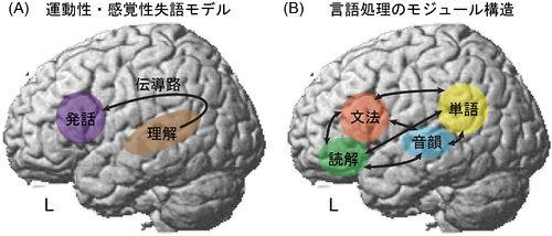 言語中枢 - 脳科学辞典