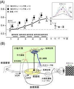 視覚運動性眼振 - 脳科学辞典