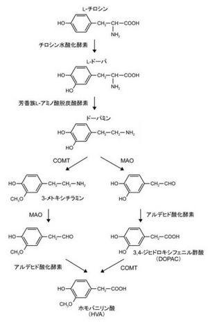 酵素 剤 酸化 モノアミン 阻害 メネシットとエフピーは併用禁忌?